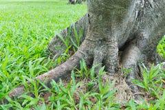 Base de l'arbre Image stock