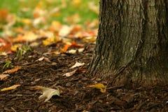 Base de uma árvore Foto de Stock Royalty Free