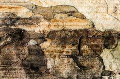 Base de un árbol de ceniza viejo, textura de Brown ilustración del vector