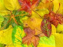 Base dei fogli di autunno variopinti Fotografia Stock Libera da Diritti