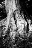 Base dell'albero Fotografia Stock Libera da Diritti