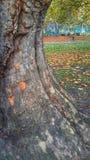 Base dell'albero Fotografia Stock