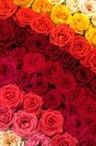 Base delle rose Fotografia Stock Libera da Diritti