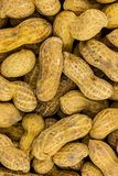 Base design cooking snack peanuts raw long pod two fruit in one set beige grocery background royalty free stock photo