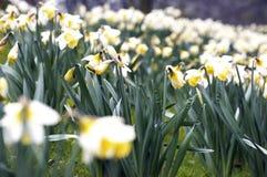 Base di fiore Fotografie Stock Libere da Diritti
