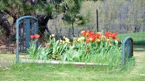 Base di fiore Fotografie Stock
