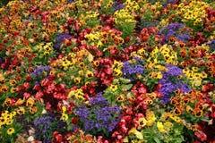 Base di fiore Immagini Stock Libere da Diritti