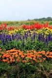 Base di fiore dell'azienda agricola di Takizawa Fotografia Stock Libera da Diritti