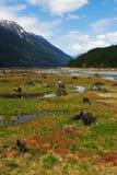 Base di lago con gli alberi guasti Fotografie Stock Libere da Diritti