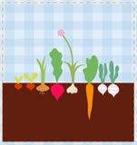Base di verdure Immagine Stock