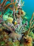 Base do coral do ventilador imagens de stock