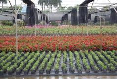Base extérieure colorée d'élevage de fleur Photo stock