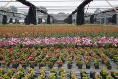 Base extérieure colorée d'élevage de fleur dans la vue de parc Images libres de droits