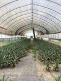Base extérieure d'élevage de fleur avec la couverture en parc Photo stock