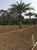 Base extérieure d'élevage de fleur en parc Images libres de droits