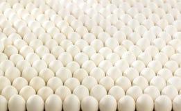 Base horizontal com ovos naturais imagens de stock royalty free