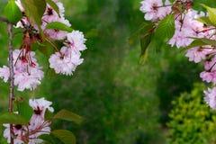 Base pour une banni?re avec les fleurs et les feuilles naturelles Vue pour le texte avec des fleurs et des feuilles Base pour une photo stock
