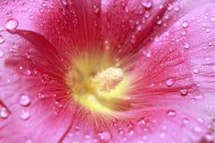 Base roja de la flor Fotos de archivo libres de regalías