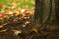 Base of a tree. In autumn Royalty Free Stock Photo