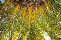 Base y ramificaciones de la palmera con el cielo Imagenes de archivo