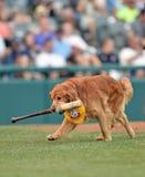 Baseball 2014 della lega minore Immagine Stock Libera da Diritti