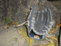 Baseball glove on a tree stock image