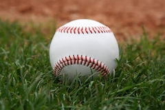 Baseball in grass. Baseball at rest in grassy outfield Stock Photo