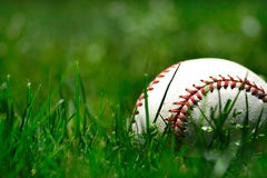 Baseball in the grass closeup Royalty Free Stock Images
