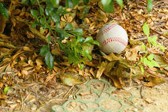A baseball on the ground Stock Image