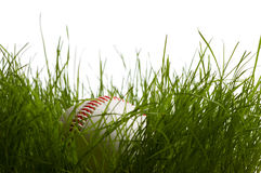 Baseball hidden in tallgrass Stock Photography