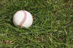 Baseball in long grass. Baseball lying in long rough grass Royalty Free Stock Photography