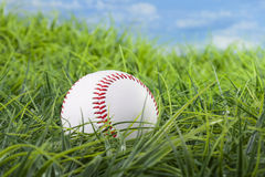 Baseball lying in the grass Stock Image