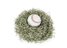 Baseball in Nest of Shredded Dollars Stock Photo