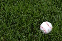 Baseball in the outfield. Baseball in the grass in the outfield Stock Photos