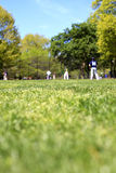 Baseball in the park Royalty Free Stock Photo