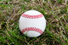Baseball sitting in the grass Royalty Free Stock Images