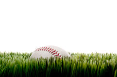 A baseball on tall grass on white with copy Royalty Free Stock Image