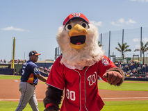 Baseball Washington Nationals Mascot Screech. March 26, 2017 - West Palm Beach, Florida : Mascot Screech walking the field during Spring Training game of royalty free stock photo