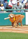 Baseballschläger, der Hund am Spiel zurückholt Stockbild