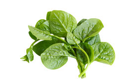 Basella Spinach Stock Photography