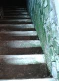 Basement stairs green moss on the wall Stock Photography