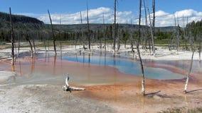 basenów nieżywi opalizujący drzewa Fotografia Royalty Free