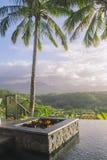basenów palmowi drzewa Zdjęcie Stock