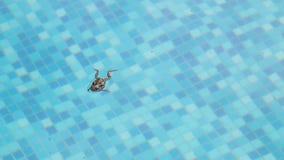 Basen żaba w basenie zbiory wideo