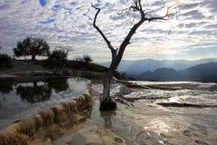 Basen i drzewo przy osłupiałymi siklawami, Hierve El Agua, Meksyk Zdjęcie Stock