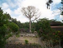 Basen i duży drzewo przy Goa Gajah, Bali Fotografia Stock