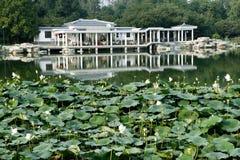 basen lotosu. Obrazy Stock