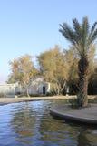 Basen przy Ein Fashkha, Einot Tzukim Naturalnej rezerwy oaza w ziemi święta Zdjęcia Stock