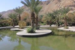 Basen przy Ein Fashkha, Einot Tzukim Naturalnej rezerwy oaza w ziemi święta Zdjęcia Royalty Free