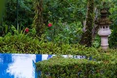 Basen w lesie tropikalnym Zdjęcia Stock